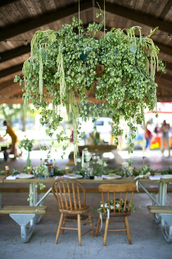 Beautiful hop hanging - but not hops, maybe another green plant? (cause that would ruin them :/ || Hops wedding decor