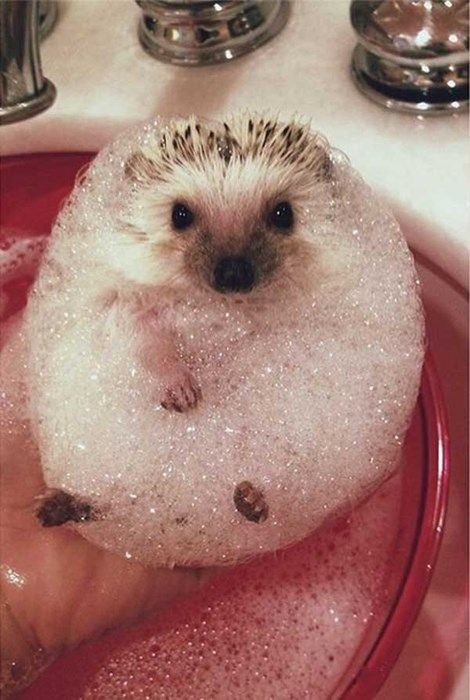 THIS bubbly little guy right here.