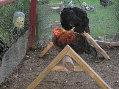 The Chicken Chick ~ Virtual Tour de Coop