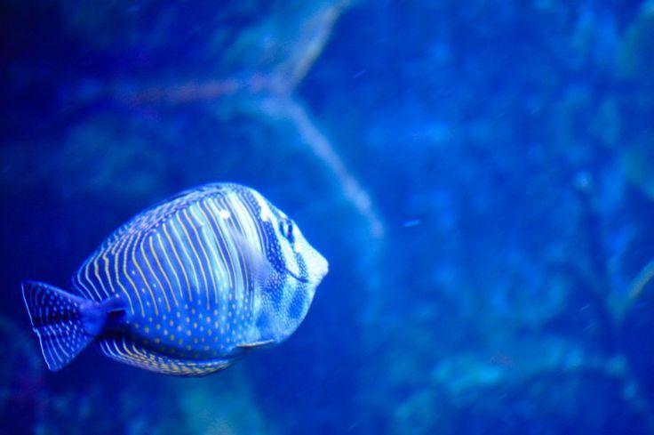 Descargar  Imágenes gratis de  Pez en el acuario