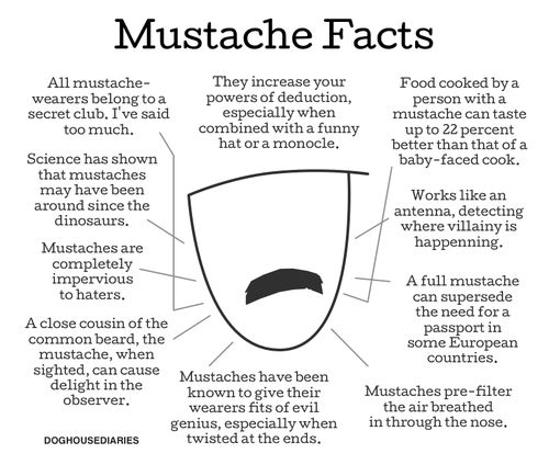 Funny Moustache Quotes: Hilarious And Humor