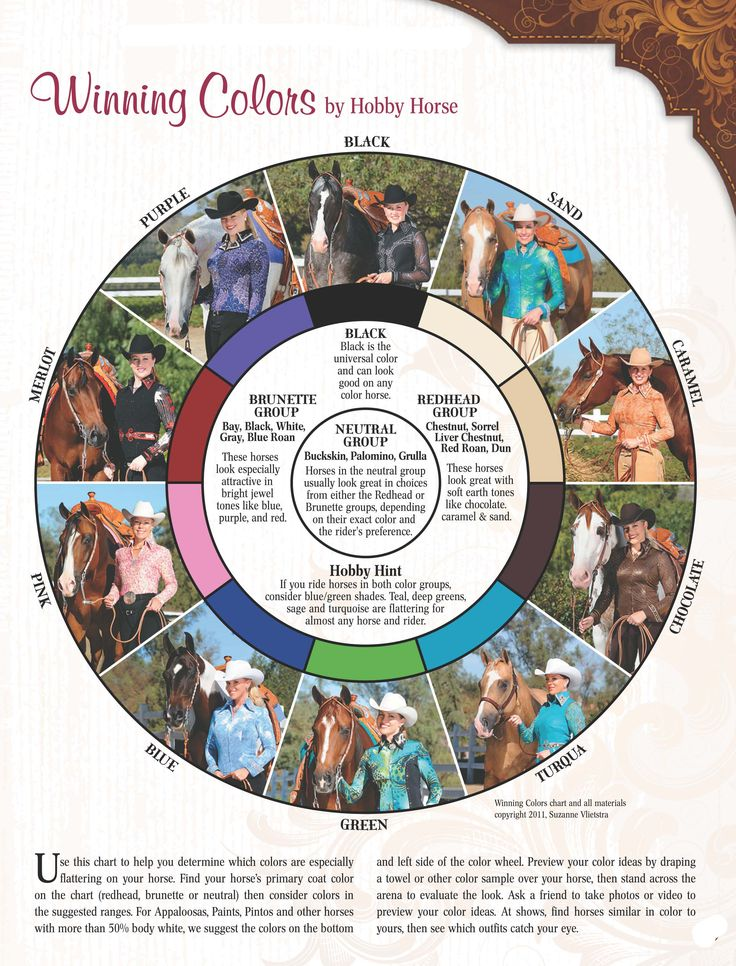 10 best images about Horse Color Chart on Pinterest ...
