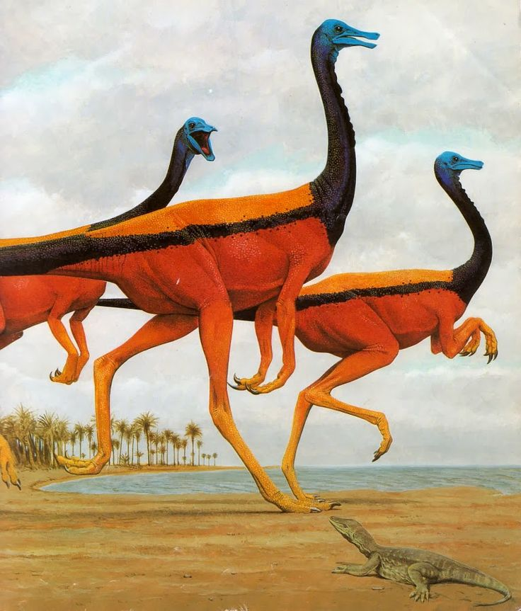 Gallimimus - Wayne Barlowe | Gallimimus was a speedy Cretaceous predator, the largest of its type. They were called chicken mimics because they probably moved like modern flightless birds. Unlike other meat-eaters, Gallimimus had no teeth. In fact, it had a very small head.