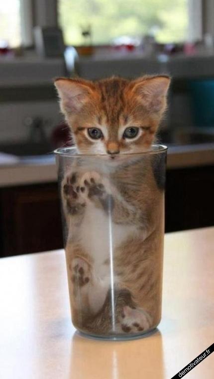 je vais boire un chat