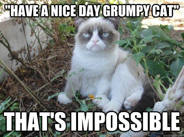 9edc6c5fa0c166d35894f10350acb9a0 grumpy cat meme grumpy kitty 117 best grumpy cat images on pinterest grumpy kitty, grumpy cat,Busier Than A Meme