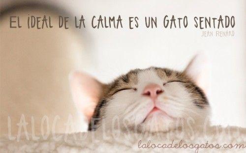 Cita Gato Calma                                                       …