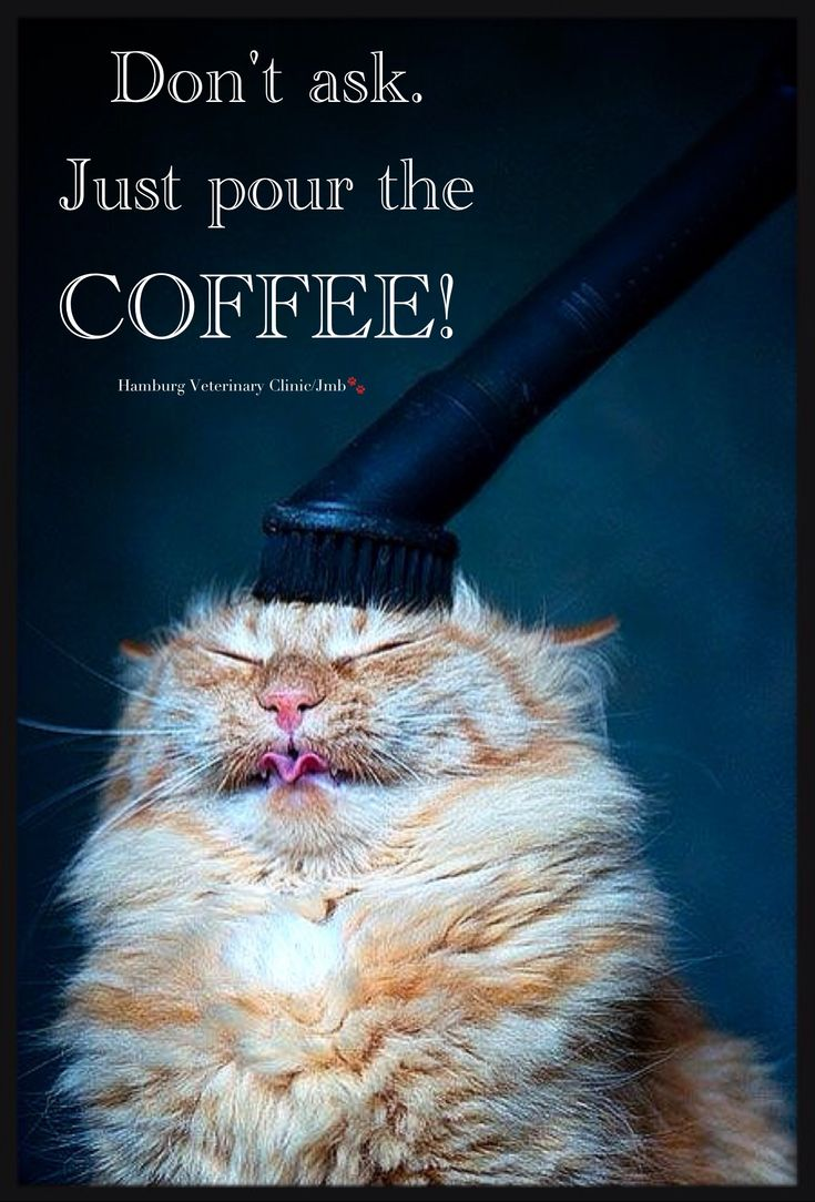Thursday Humor: Another long day - working hard - Coffee ...