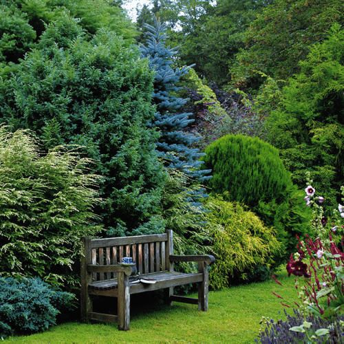 Beautiful use of various conifers