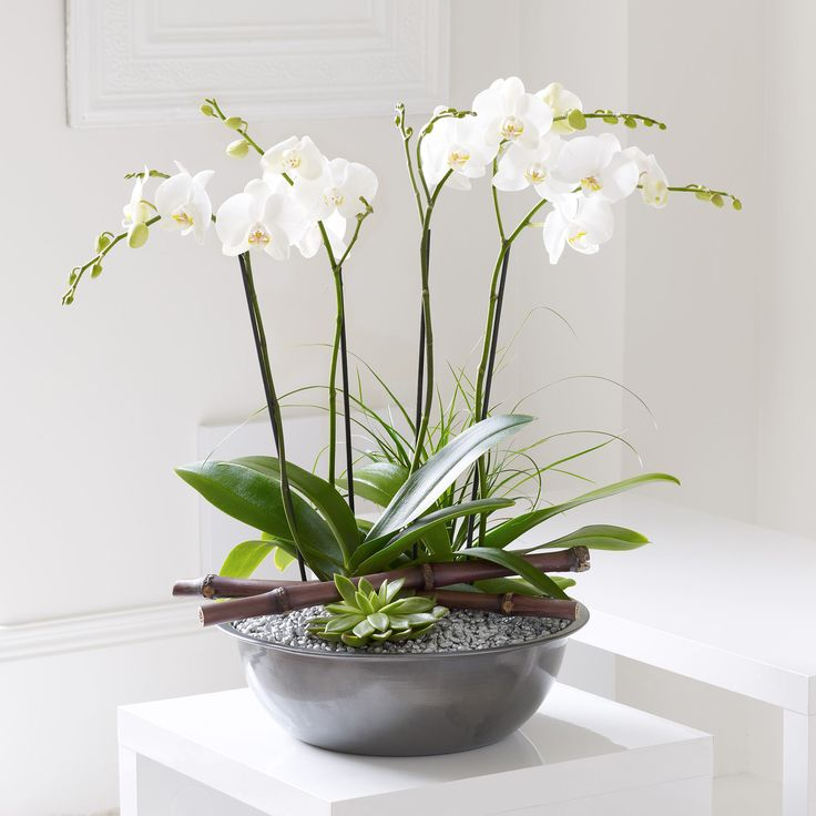 17 best images about plants in the home on pinterest for Garden arrangement of plants
