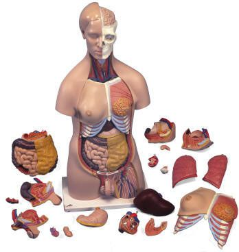 Transaminitis is the word meaning high levels of a number of liver enzymes, that are described as transaminases. http://liverbasics.com/transaminitis.html Gall Bladder Bile (Glytamins...