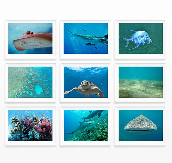 Art Print Wall Decor Wall Art Home Decor Set Of 9 Prints Beach House Decor  Aquarium Photography Underwater Sea Life Decor Bathroom Decor Bathroom Wall  Art ...