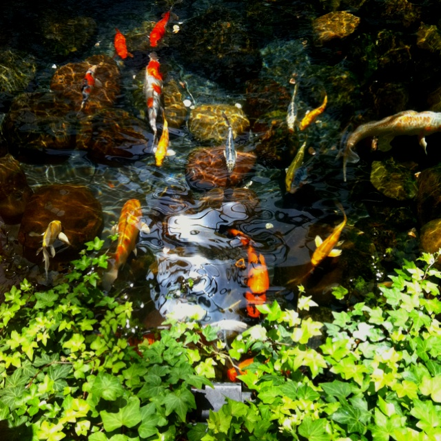 79 best koi goldfish images on pinterest gardening for Koi pond jets