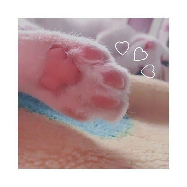 . . ぷにぷに🐾💗 . #愛猫 #ねこ #猫 #ねこすたぐらむ  #にゃんすたぐらむ #白茶mix #猫暮らし .  #singlemother #シングルマザー #mama #ママ #まま #男の子 #息子 #子供 #kids #キッズ #親子 #親ばか部 #love #hughug ❤︎ ❤︎ ❤︎