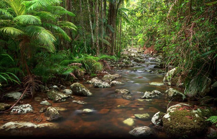 Bangalow, NSW. One of the most beautiful places on earth...