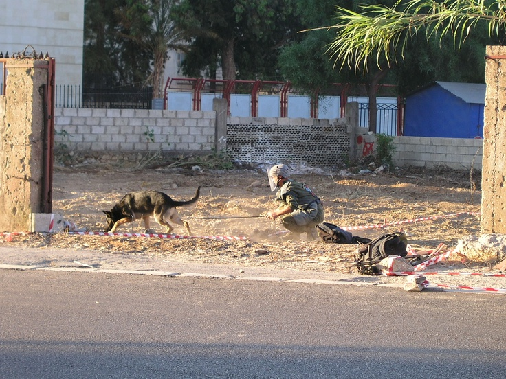 Sniffing Out Landmines In Lebanon Detection Dogs Best Dogs