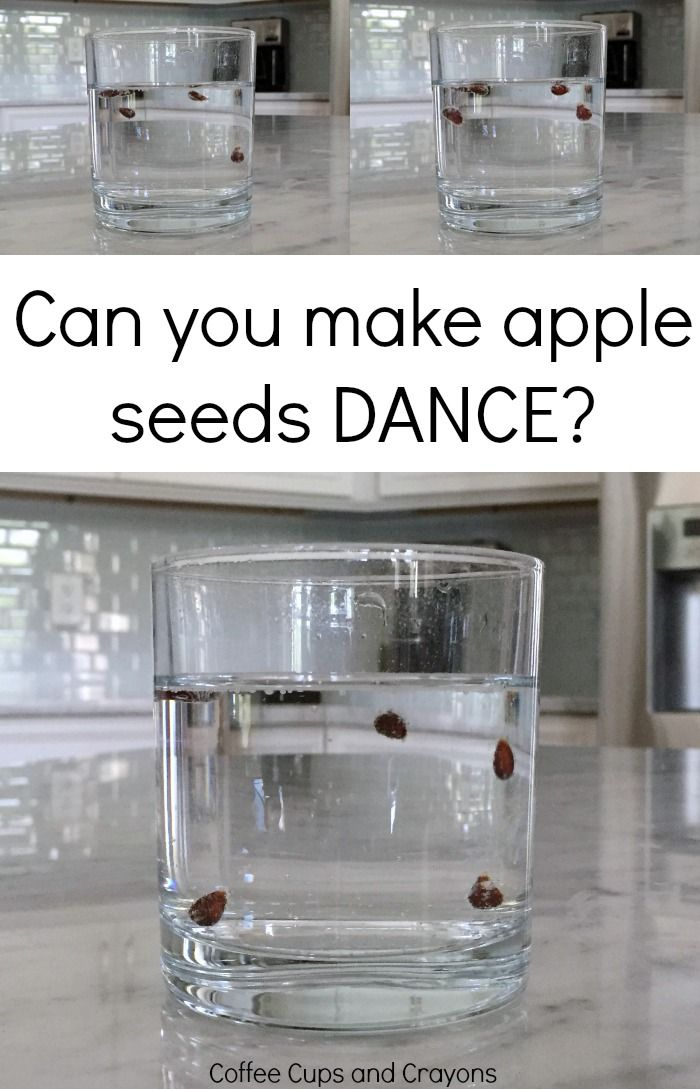 Super cool (and easy!) apple seed science experiment!