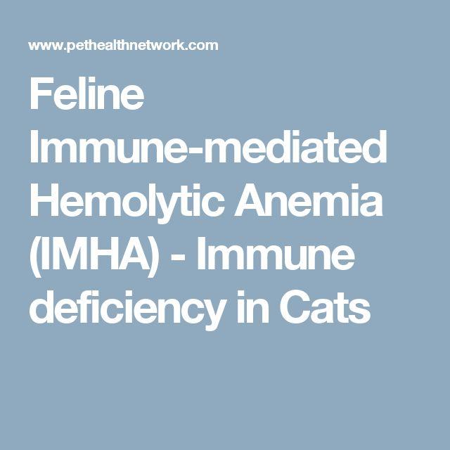 Feline Immune-mediated Hemolytic Anemia (IMHA) - Immune deficiency in Cats