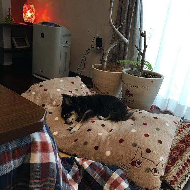 今日もゲーしたライフさん。 ご飯も食べなくて、 急遽夜間も診療している動物病院へ。 生まれつき心臓が悪いらしく、 お薬飲むことになりました。 お散歩も良くないと… 心配だな。 #いぬ#家族#癒し#わんこ#愛犬#ペット#チワワ#ロングコートチワワ#ブラックタン#ふわもこ部 #いぬバカ部 #dog#doglover #dogstagram #instadog #pretty #adrable #family #chihuahua #cute