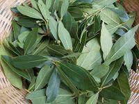 Receta de jabón de laurel con  aceite de oliva y una infusión de hojas de laurel.Le añadimos esencias de cedro, laurel y verbena.
