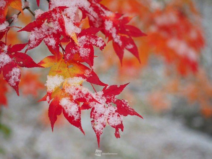 週末絶景!美しい紅葉の便り。 Shūmatsu zekkei! Utsukushī kōyō no tayori. Akhir pekan yang menakjubkan! Berita daun merah yang cantik. http://weathernews.jp/s/topics/201610/300055/