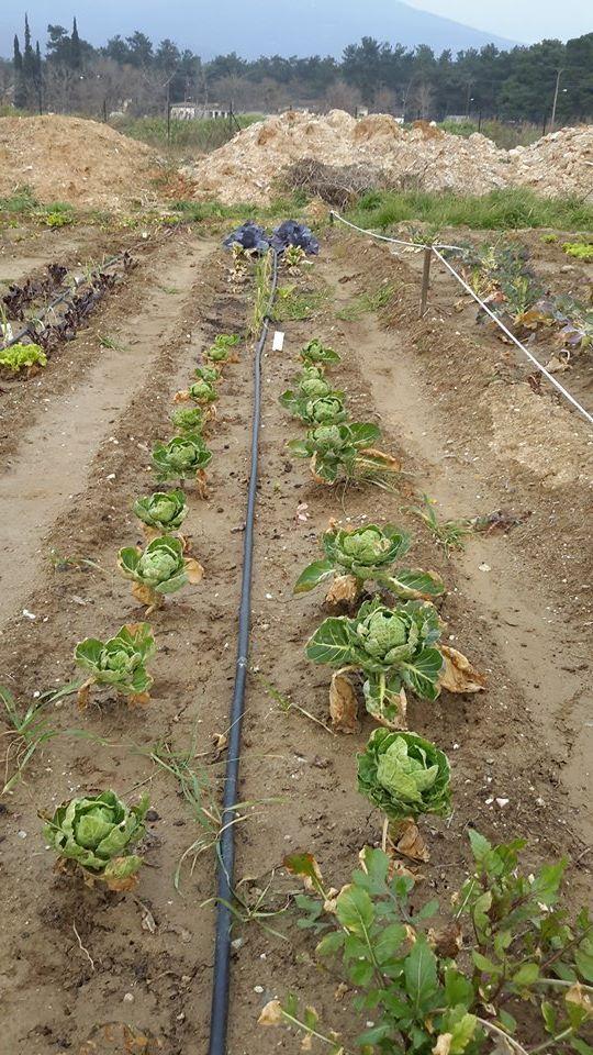Ιανουάριος 2015 στον Δημοτικό Λαχανόκηπο