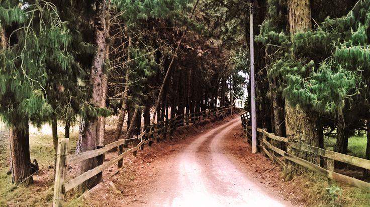 Tomada en Chía, Cundinamarca en la montaña de Yerbabuena