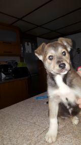 MIL ANUNCIOS.COM - Regalo cachorro border collie. Compra-venta de perros regalo cachorro border collie. Regalo de cachorros..