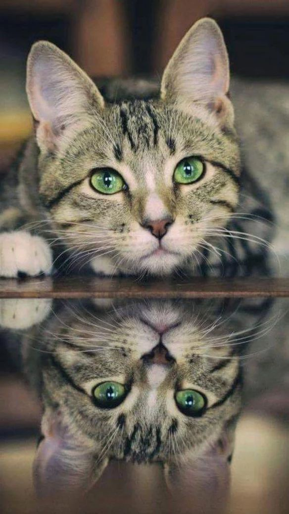 Mirror image - Beautiful green eyes! #Cats