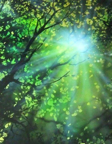 Ted Hayward - Hayward_forest Sunburst