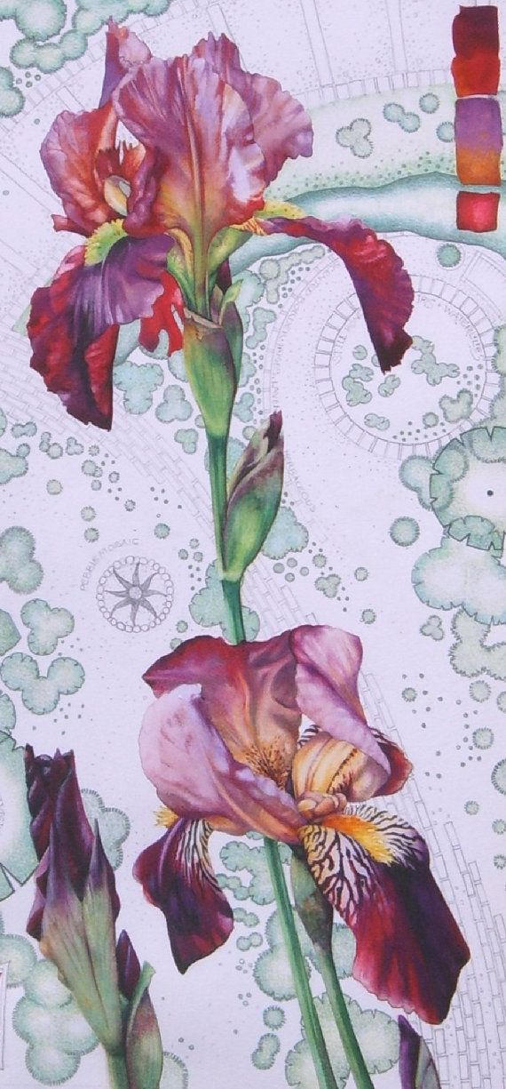 "Original watercolour painting of lilac and dark red Bearded Iris flowers. 10"" x…"