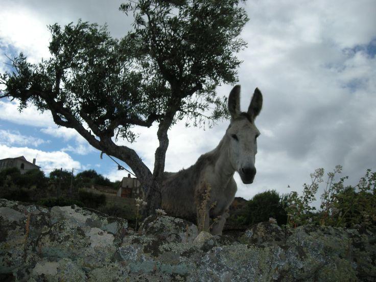 Portugal, près de Guardia. Photo F Bertel, 2007