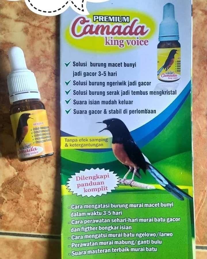 Camada King Voice Vitamin Burung Gacor Wa 088804996950 Kristal Kemacetan Burung