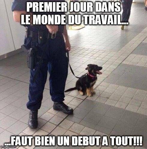 Un bebe chien policier