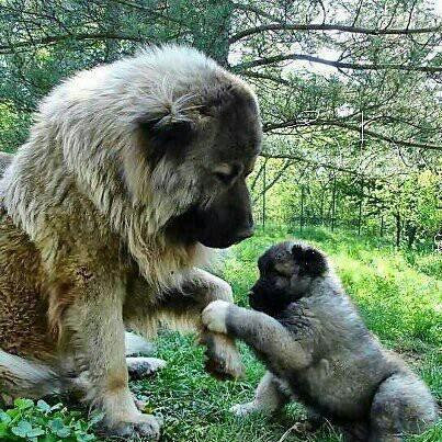 Big Dog http://dooup-usa.myshopify.com/blogs/news