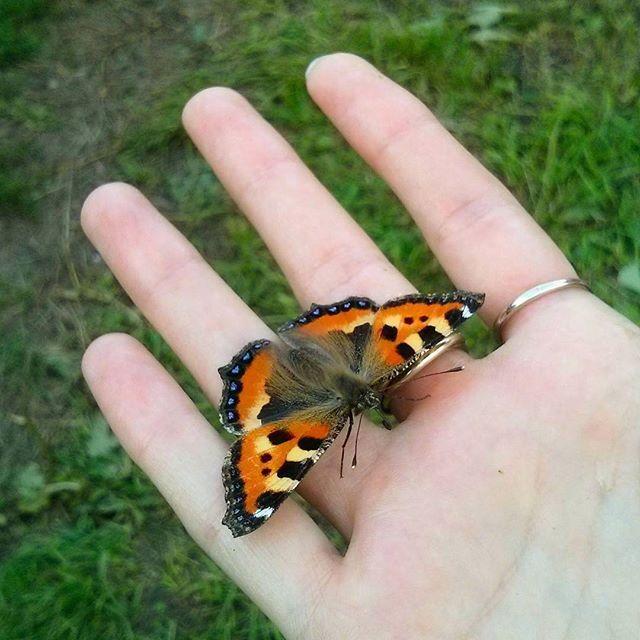 Погода наконец-то начинает радовать 😊🐝 #весна #бабочка #крапивница #природа #butterflys #springcoming #nature
