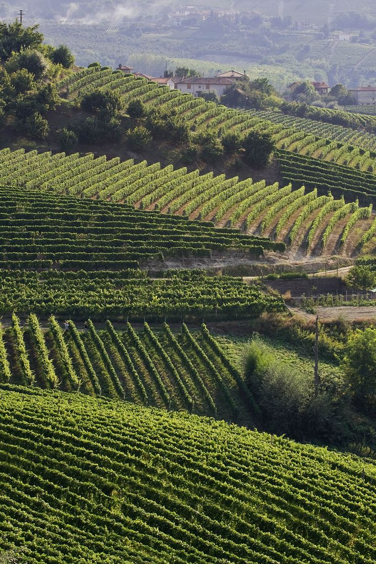 Vineyards. Langhe, Piemonte, Italy  www.bebcascinamerio.it