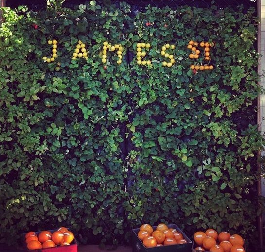 Edible Wall from James Street Food and Wine Festival