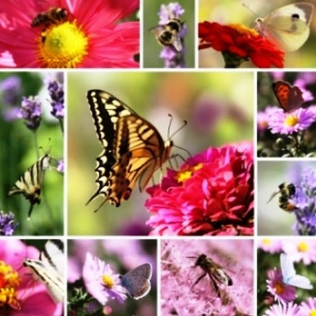 Image result for bees birds and butterflies collage