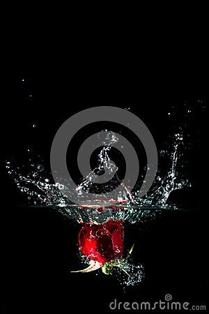 Roses splash in water with droplets