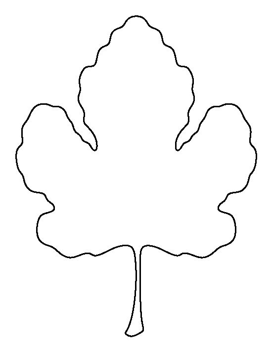 Best Leaf Template Images On   Leaf Template Paper