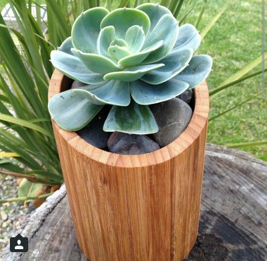 Great hack on toilet roll holder into a gorgeous wooden Succulent planter. Kmart Australia style