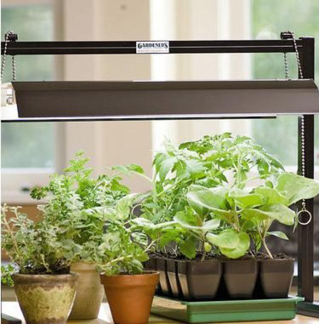 Indoor Gardening Kits