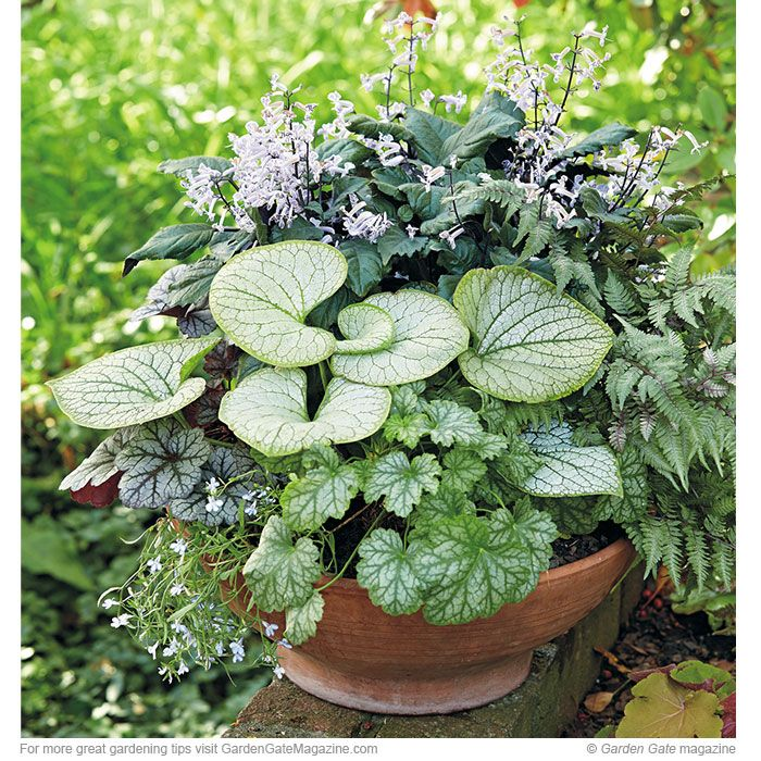 Fall Vegetable Garden Plan: Try This Easy Fall Container