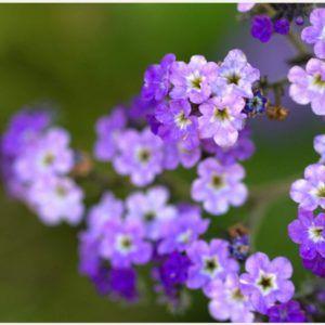 Little Purple Flowers HD Wallpaper | purple flowers hd wallpapers