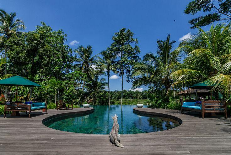 Swimming pool at Permata Ayung Private Estate