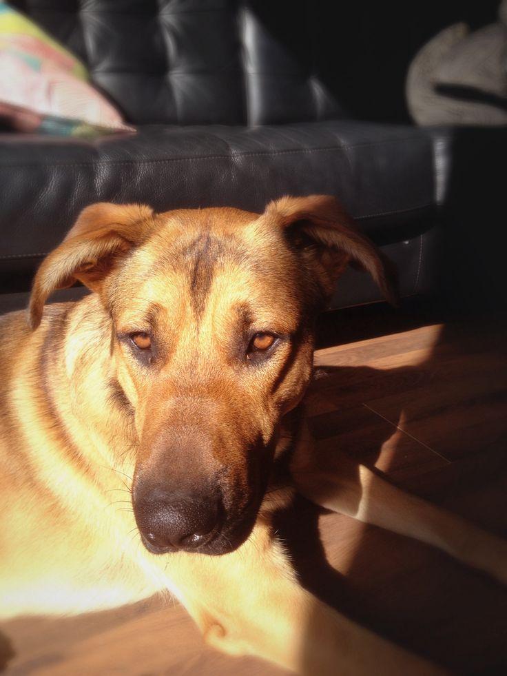 Buddy -> love. Our family dog enjoying the sun