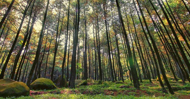 Berburu Foto Di Hutan Pinus Imogiri