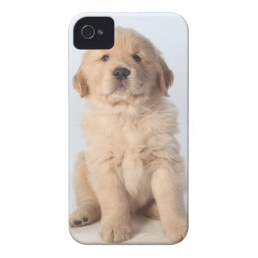 >>>Cheap Price Guarantee          	Portrait of six week old golden retriever puppy. iPhone 4 case           	Portrait of six week old golden retriever puppy. iPhone 4 case In our offer link above you will seeReview          	Portrait of six week old golden retriever puppy. iPhone 4 case Review...Cleck Hot Deals >>> http://www.zazzle.com/portrait_of_six_week_old_golden_retriever_puppy_case-179627694392874737?rf=238627982471231924&zbar=1&tc=terrest
