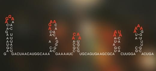 An RNA enigma has been cracked