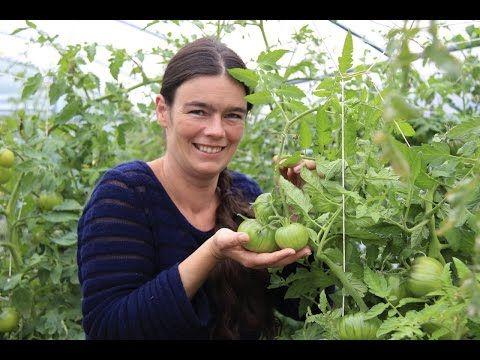 5 Tomatenkrankheiten 1: Bakterien an Tomatenblüten & Braunfäule - YouTube